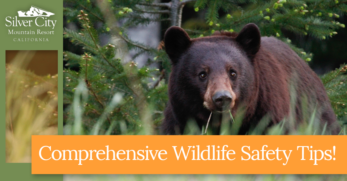 Comprehensive Wildlife Safety Tips.jpg